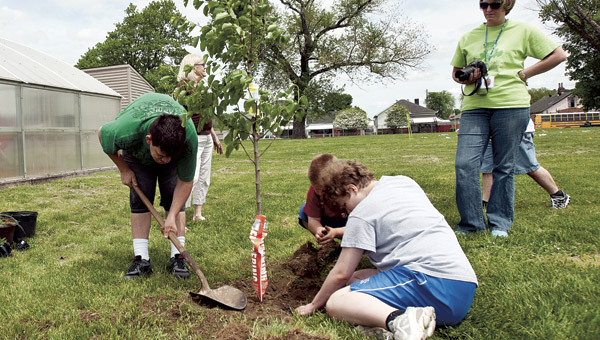 Students from The Open Door School put a flowering pear tree in the ground at the school during a tree planting event Thursday.