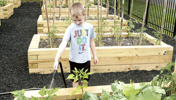 Thomas Stapleton waters the vegetable plot that he and his grandmother, Mary VanMeter, planted at the Community Garden.