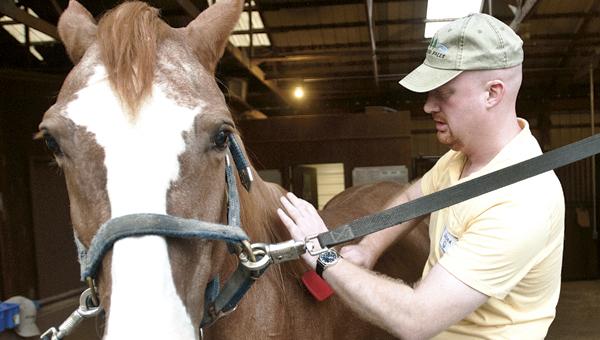 Jason Bunn grooms one of the horses at the Ohio Horse Park.