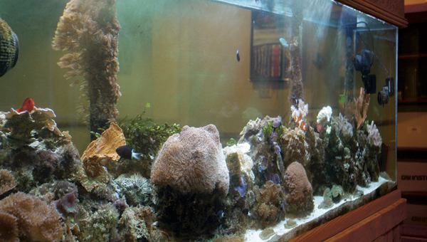 This saltwater fish tank on the second floor of the academic center at Ohio University Southern is a self-sustaining coral reef habitat. A project of biology professor Dr. Mike Millay, the tank contains various forms of sea life, some of which grew on its own several years after the habitat was created.
