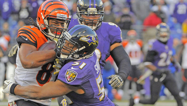 Daryl Smith (51) of the Baltimore Ravens stops Alex Smith (81) of the Cincinnati Bengals on a gain of two yards during overtime at M&T Bank Stadium in Baltimore on Sunday. The Ravens won, 20-17 in overtime. (MCT DIRECT PHOTO)