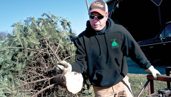 Keith Dickess, owner of the Dickess Tree Farm, shakes a tree Saturday at his business in Andis.