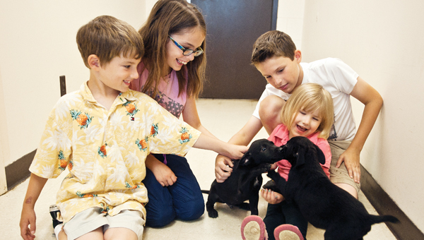 Siblings Ronan, Maia, Malcolm and Madeleine McCown bond with their new puppy when another puppy comes running out during a pet adoption event at the Lawrence County Animal Shelter on Saturday.