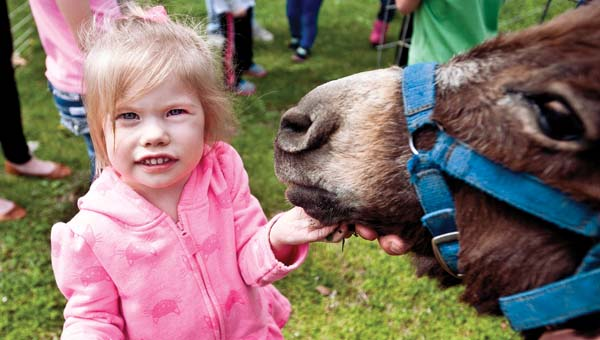 Finley Clyse feeds Philip the burro on Thursday at St. Lawrence Elementary School. Children were given an opportunity to visit farm animals as part of Week of the Young Child.