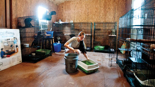 Volunteer Destiny Pruitt cleans up up the cat barn at the Lawrence County Animal Shelter Saturday.