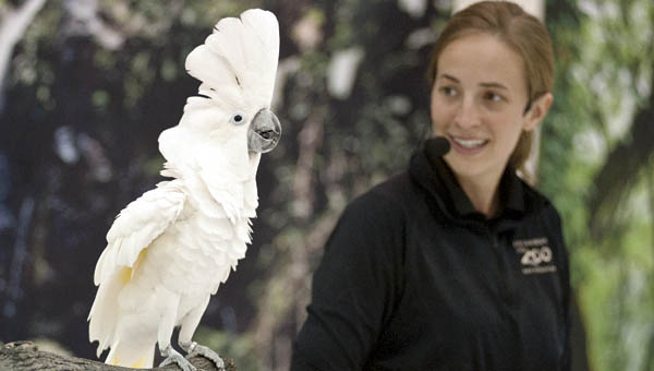 Jen Dew, with the Columbus Zoo, shows off Avery the umbrella cockatoo during a visit to South Point Elementary School.