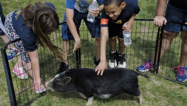 Elementary students enjoy petting zoo animals at a community celebration of South Point schools' performance on this year's academic report cards.