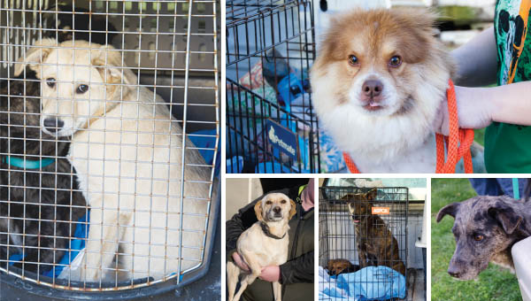 Last year the organization sent 4,189 dogs and cats to rescues, where homes were found for them.